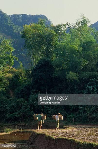 No Vietnam Near Hoa Binh Giang Mo Village Muong Hilltribe Men Walking Along Rice Field