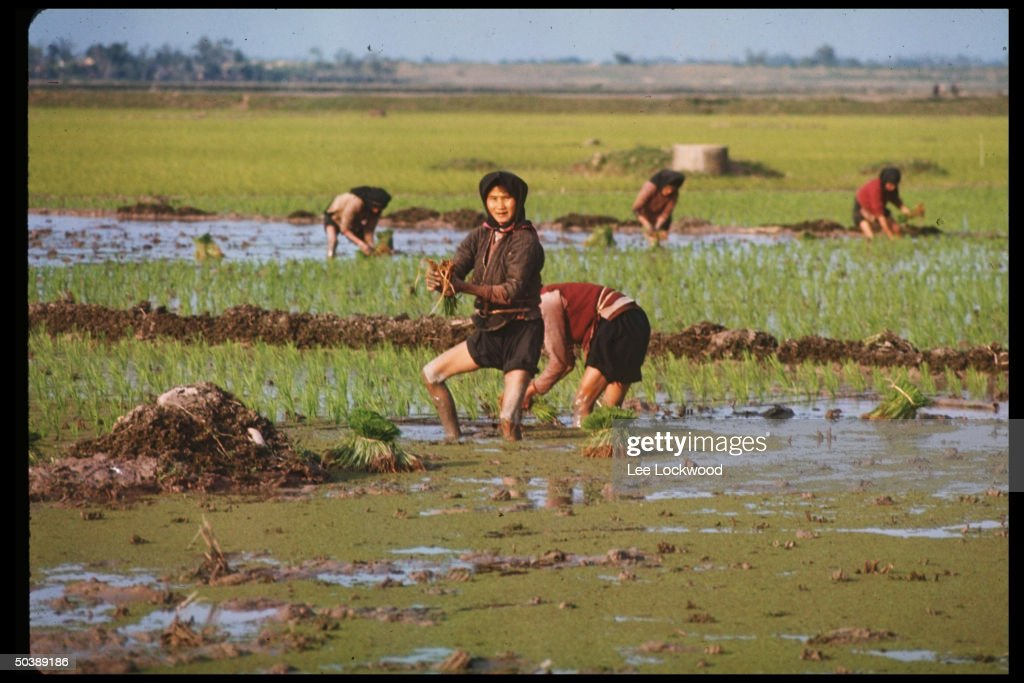 No. Vietnamese peasants working in rice paddies.