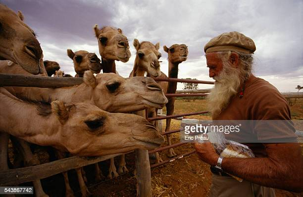 Noel Fullerton and his team capture wild dromedaries with lariats for export or to tame and train them for safaris or competition Fullerton's farm is...