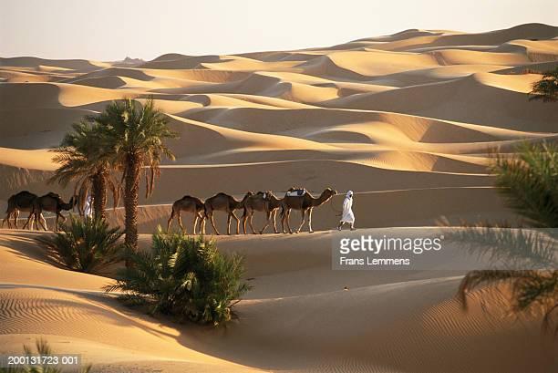 Nomad driving camel train across desert