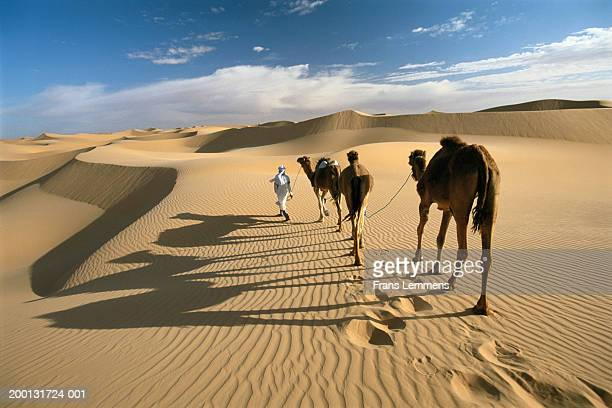 Nomad driving camel train across desert, rear view