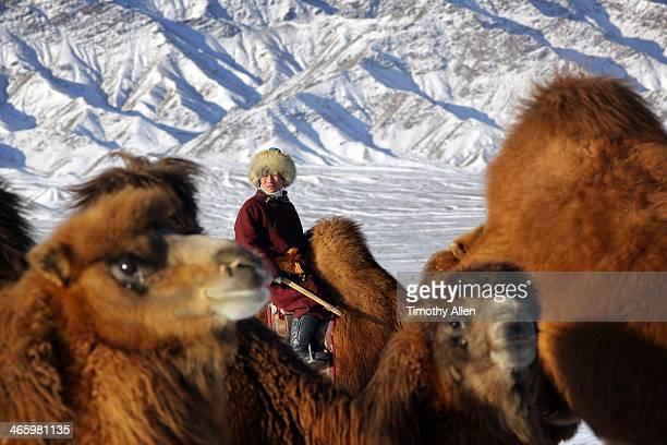 Nomadic herder & Bactrian camels in snow