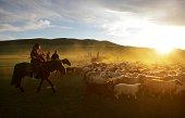Nomadic horsemen herd cashmere goats at sunset