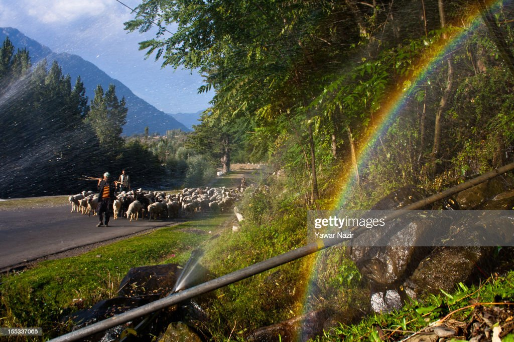 A nomadic Kashmiri man walks with his herd of sheep on November 3, 2012 in Pahalgam, south of Srinagar, the summer capital of Indian administered Kashmir, India. Pahalgam, the Village of Shepherds, is a popular tourist destination where every year large numbers tourists visit from India and abroad. Tourists enjoy long hikes throughout the areas of Lidderwat, Kolohoi Glacier, Sonmarg and various other mountains around Pahalgam.