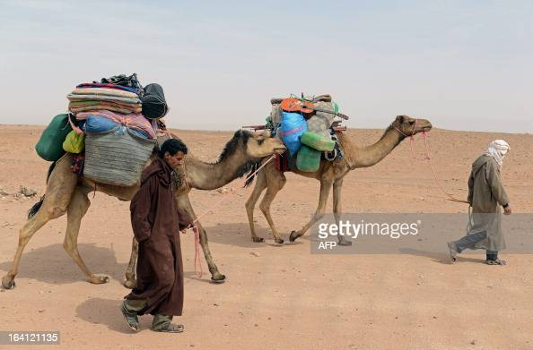 Nomads come back after travelling for seven days in the Moroccan desert on March 16 2013 in M'hamid El Ghizlane southeast of Zagora AFP PHOTO/FADEL...