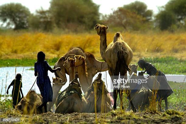 Nomads Zawada