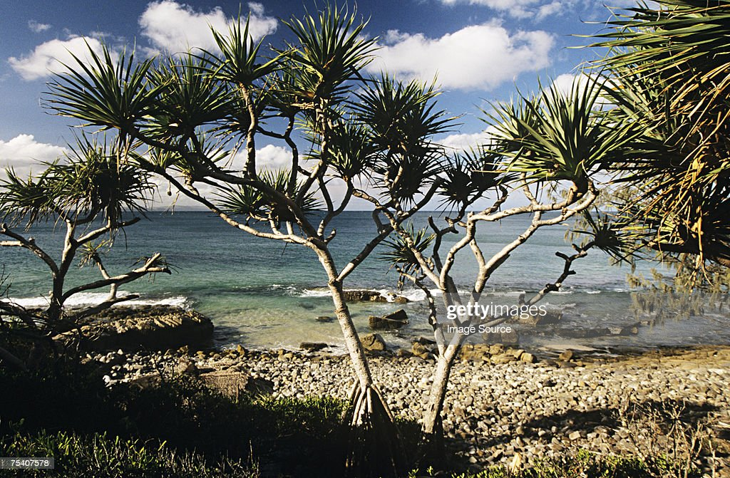 Noosa beach australia : Stock Photo