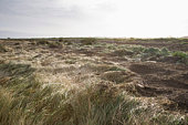 UK,  Norfolk,  field of grass
