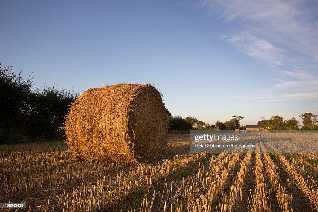 Normandy Fields : Stock Photo