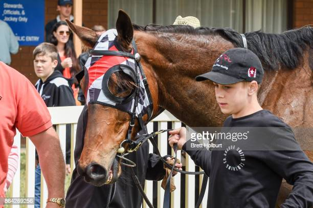 Normandy Lad after winning McConnell Dowell Martinus Rail BM52 Handicap at Avoca Racecourse on October 21 2017 in Avoca Australia