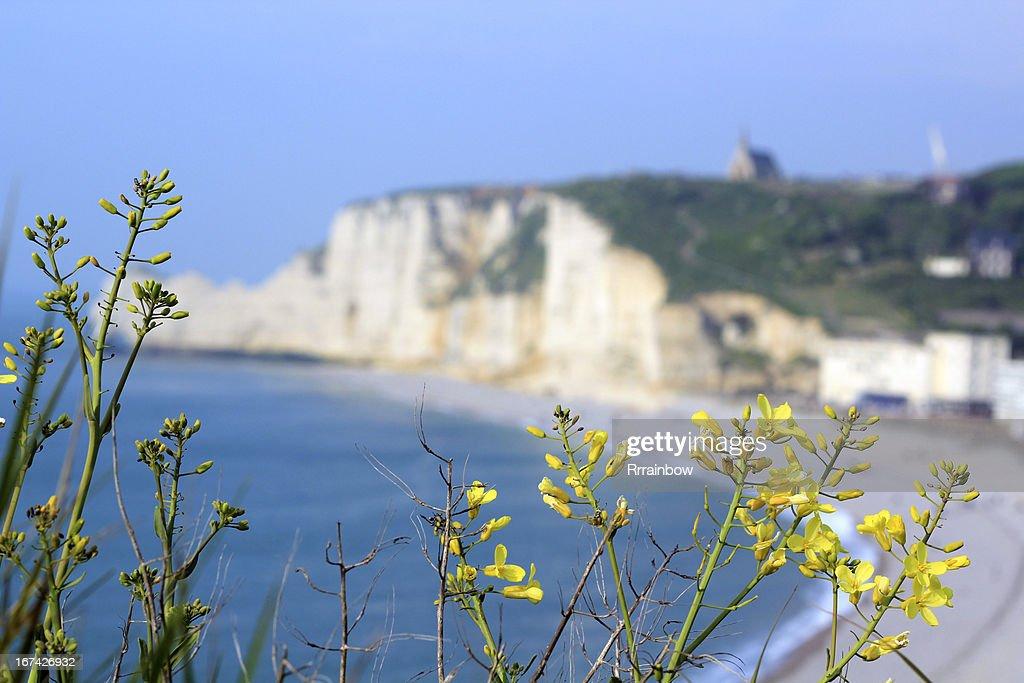 Normandia : Foto de stock