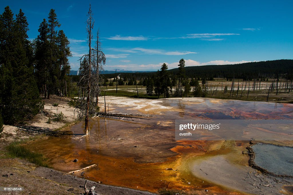 Norris Geyser Basin, Yellowstone National Park : Stock Photo