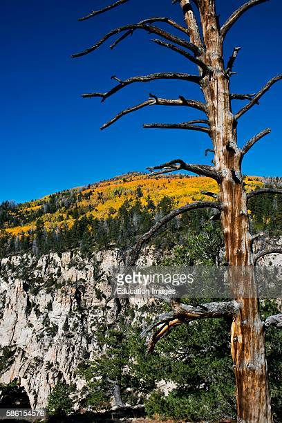 North America USA Utah Boulder Escalante BoxDeath Hollow Wilderness Vistas from Pine CreekHell's Backbone roads with Foreground Snag