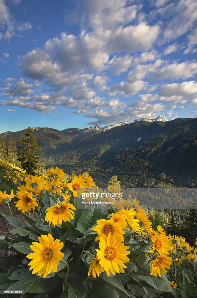 North Cascades wildflowers