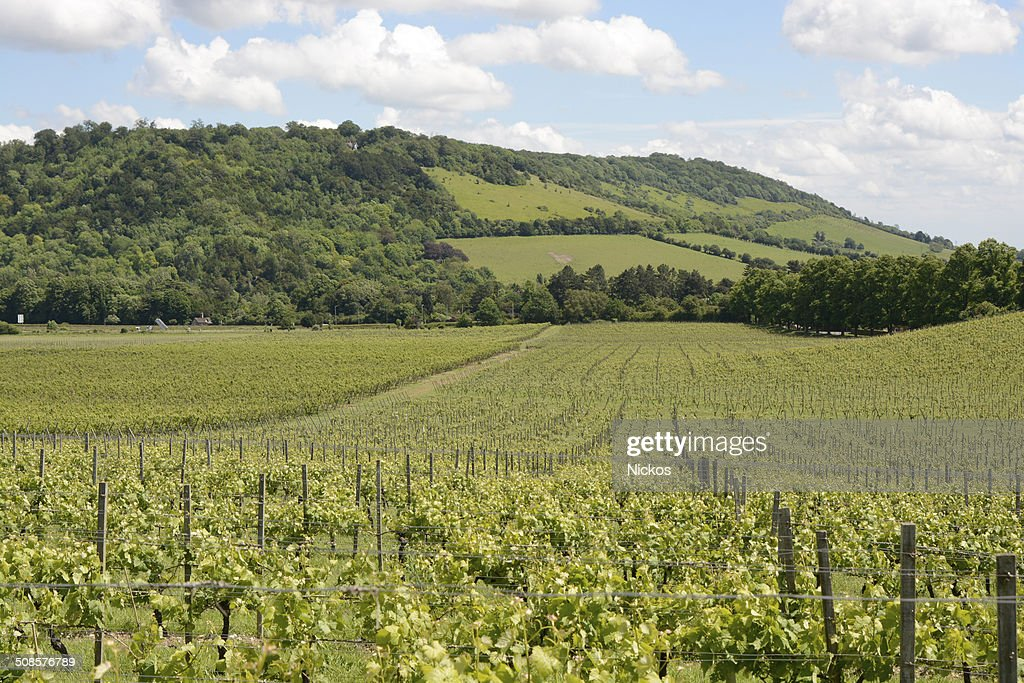 North Downs and vineyard. Surrey. England : Stock Photo