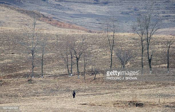 A North Korean woman walks across fields amid a dry and barren landscape on the banks of the Yalu River some 70km north of Dandong in northeast...