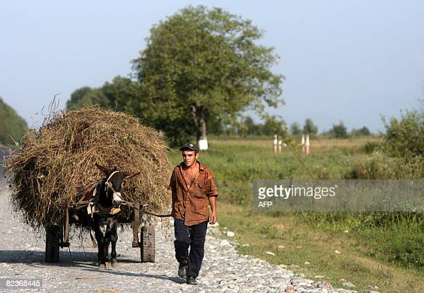 A North Ossetian man goes with his donkey in Allagir near the border between Russia and South Ossetia on August 15 2008 haos reigned on Friday in...