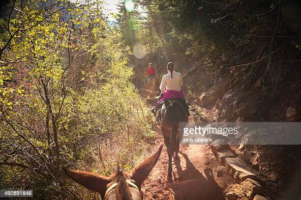 North Rim Grand Canyon sur des mules en famille