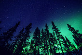 Northern Lights and forest close to Yellownife, NW