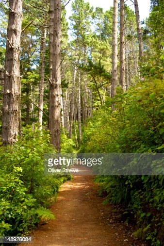 Northern Walk through the Town Belt to St. Mary street. : Stock Photo