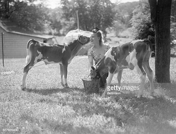 Laura Zaleski kneels one the ground as she feeds a pair of calves from a bucket Photo circa 1950