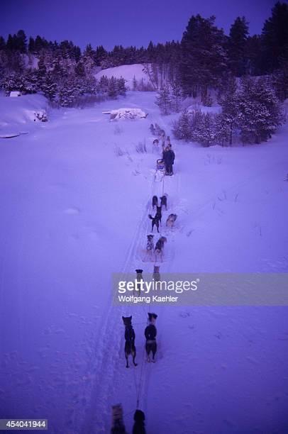 Norway Finnmark Near Karasjok Midwinter Dogsled Team Around Noon