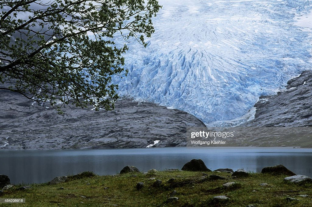 Norway, Near Bodo, Svartisen Glacier, Tree In Foreground.