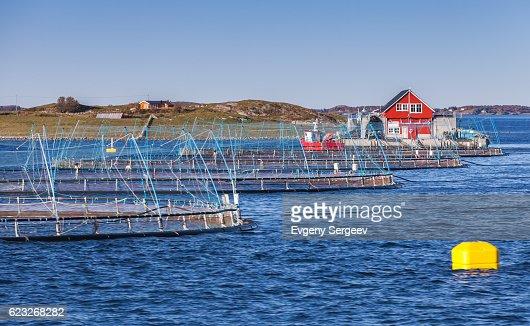 Norwegian fish farm : Stock Photo
