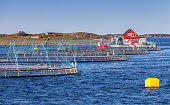 Norwegian fish farm for salmon growing in natural environment. Sea fjord in Trondheim region