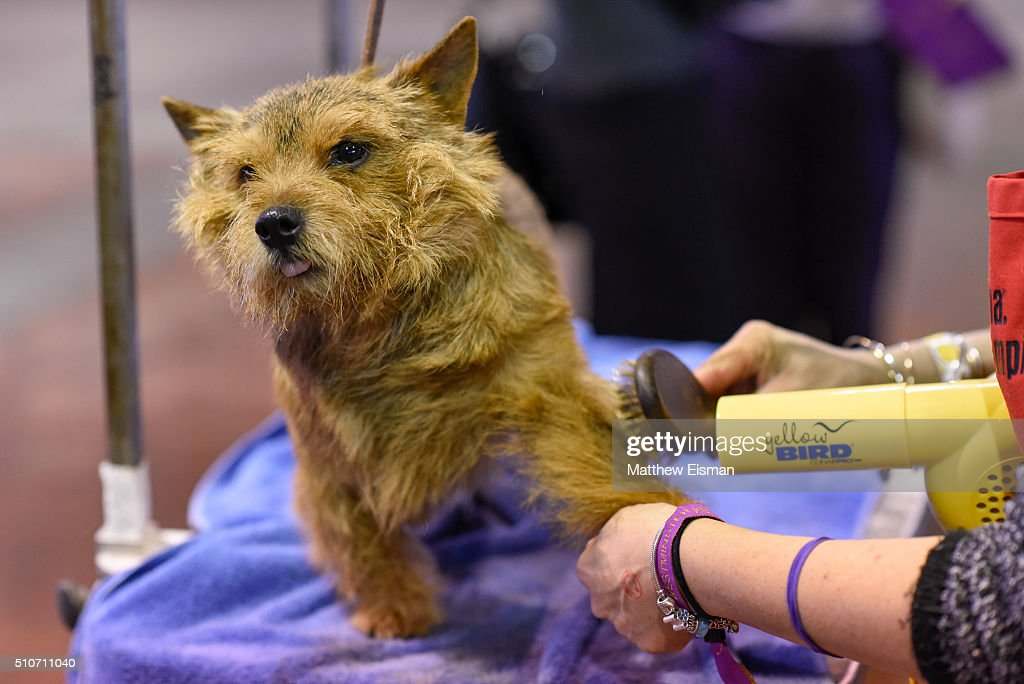 Westminster Kennel Club Dog Show | Getty Images