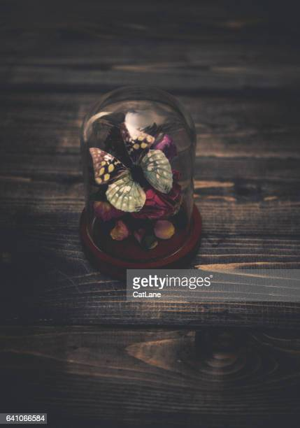 Nostalgic souvenirs. Butterfly and roses still life