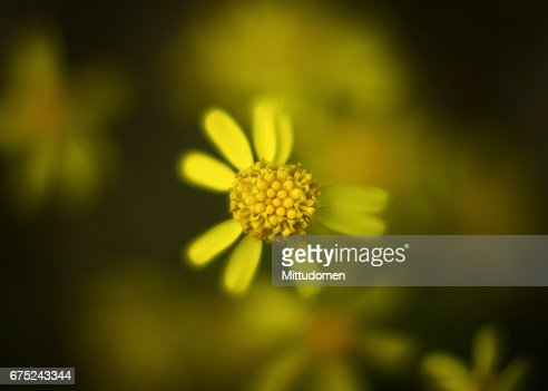 Not perfect petals : Stock Photo