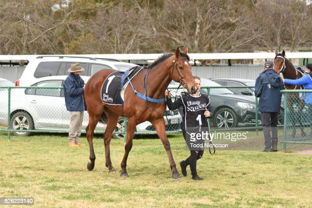 Not to Know parades before Save the Date Emmetts John Deere BM64 Handicap at Warracknabeal Racecourse on August 04 2017 in Warracknabeal Australia