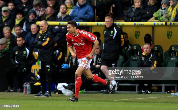 Nottingham Forest's Tyler Walker comes on as a substitute