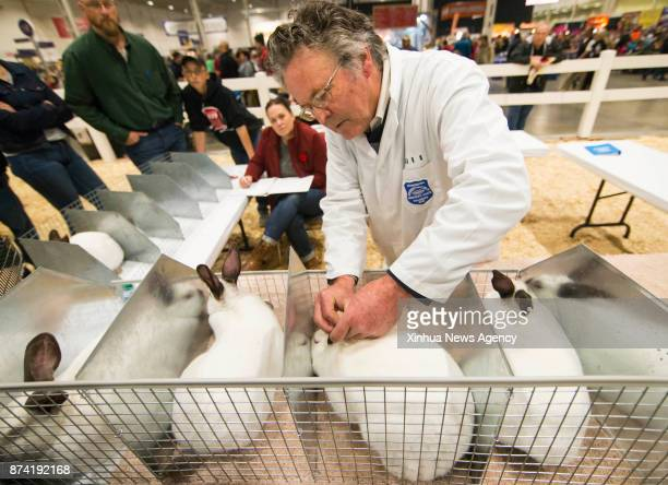 A judge checks a rabbit during the Rabbit Cavy and Poultry Show at the 2017 Royal Agricultural Winter Fair in Toronto Canada Nov 12 2017