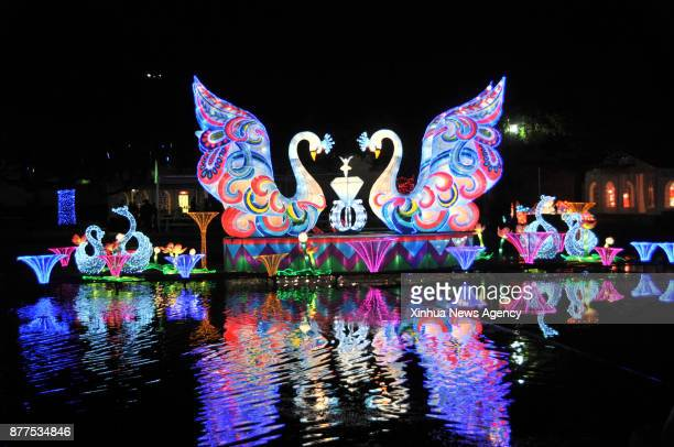 The lights of floating swans switch on as a preshow for local media at the Fair Park in Dallas the United States Nov 20 2017