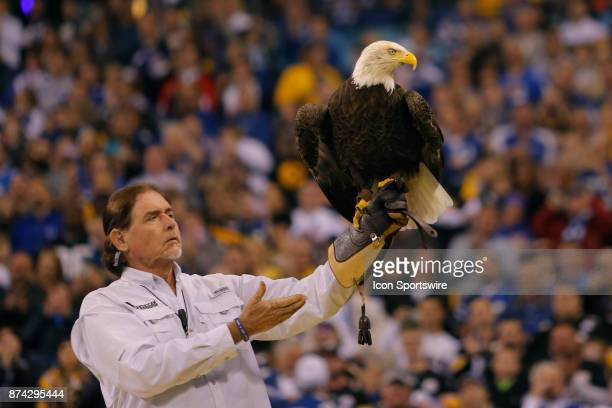 Challenger the Bald Eagle during the National Anthem prior to an NFL football game between the Pittsburg Steelers and the Indianapolis Colts on...