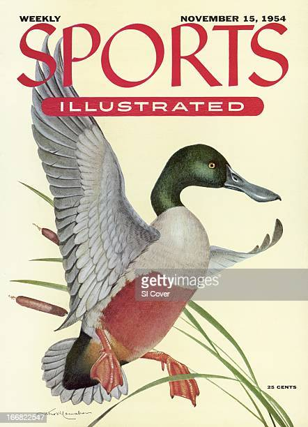 November 15 1954 Sports Illustrated Cover Illustration of Shoveller Duck painting by Art Department New York NY CREDIT Athos Menaboni