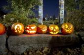 November/1/2010 Roncesvalles community residents admire jackolanterns in Sorauren Park the night after Halloween The Pumpkin Parade event has become...