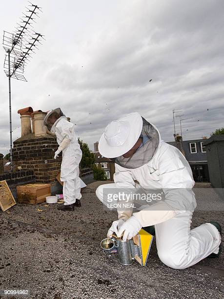 Novice beekeepers Jack and Bella HeathcoatAmory tend to their hive on the roof of their home in west London on September 6 2009 In tiny urban gardens...