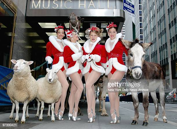 Now playing outside the Radio City Music Hall Rockettes Melanie Allen Melissa Rouse Amanda Suchy Melissa Hillmer two unnamed sheep and a donkey give...