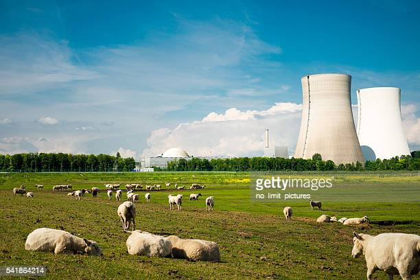 nuclear power plant and sheep