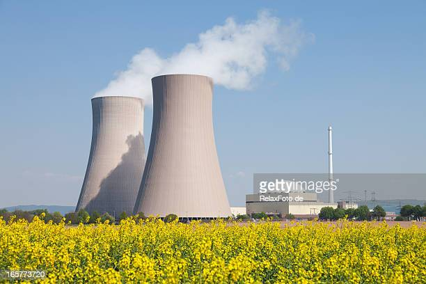 Nuclear power station with steaming cooling towers and canola field