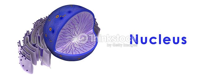 Nucleus Of Animal Cell Stock Photo | Thinkstock