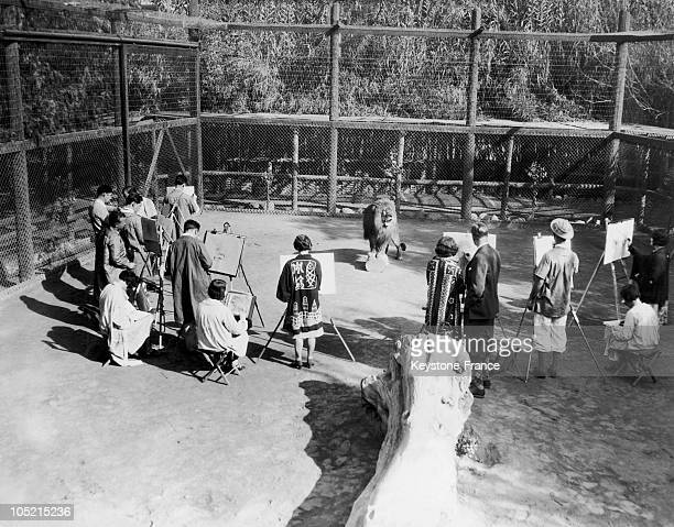 Numa A Lion Posing In His Cage In Front Of A Drawing Class In The Zoo Of El Monte In California In 19201940
