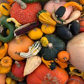 Many brightly coloured (mainly orange, yellow, green, pink, white) gourds fill this image