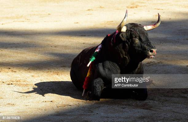 A Nunez del Cuvillo's fighting bull lies on the ground during the seventh bullfight of the San Fermin Festival in Pamplona on July 13 2017 / AFP...