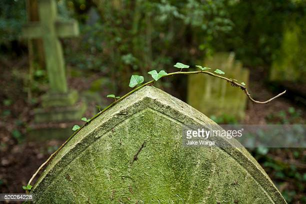 Nunhead Cemetery, Nunhead London, United Kingdom