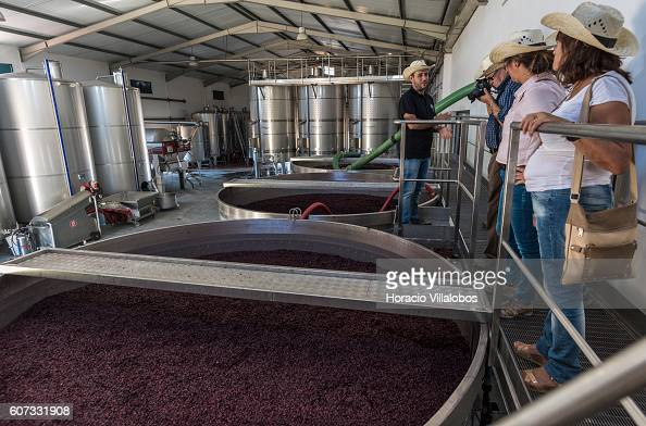 Nuno Palhoca briefs visitors on wine making standing in front a vat containing Merlot grapes at Filipe Palhoca Winery and vineyards during an openday...