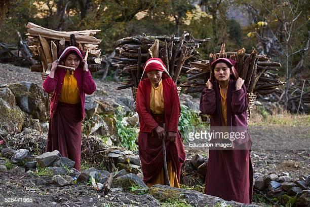 Nuns Haul Firewood In Dolko Baskets In Preparation For Winter At A Remote Tibetan Buddhist Monastery Nepal Himalaya